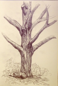 Third effort, different angle, there is more tree, lines are more graceful.