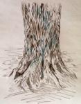 Sketching tree bark, by Nancy Wait