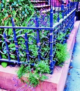 Photo by Nancy Wait; Park Slope, June 2014