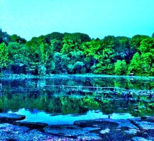 Upper Pool, Prospect Park, Brooklyn, NY; photo by Nancy Wait