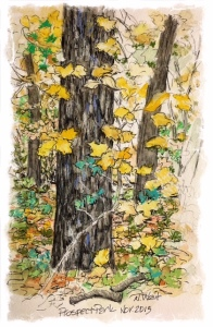 Drawing by N Wait, Nov 2015, Prospect Park