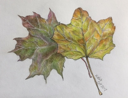 leaf drawing